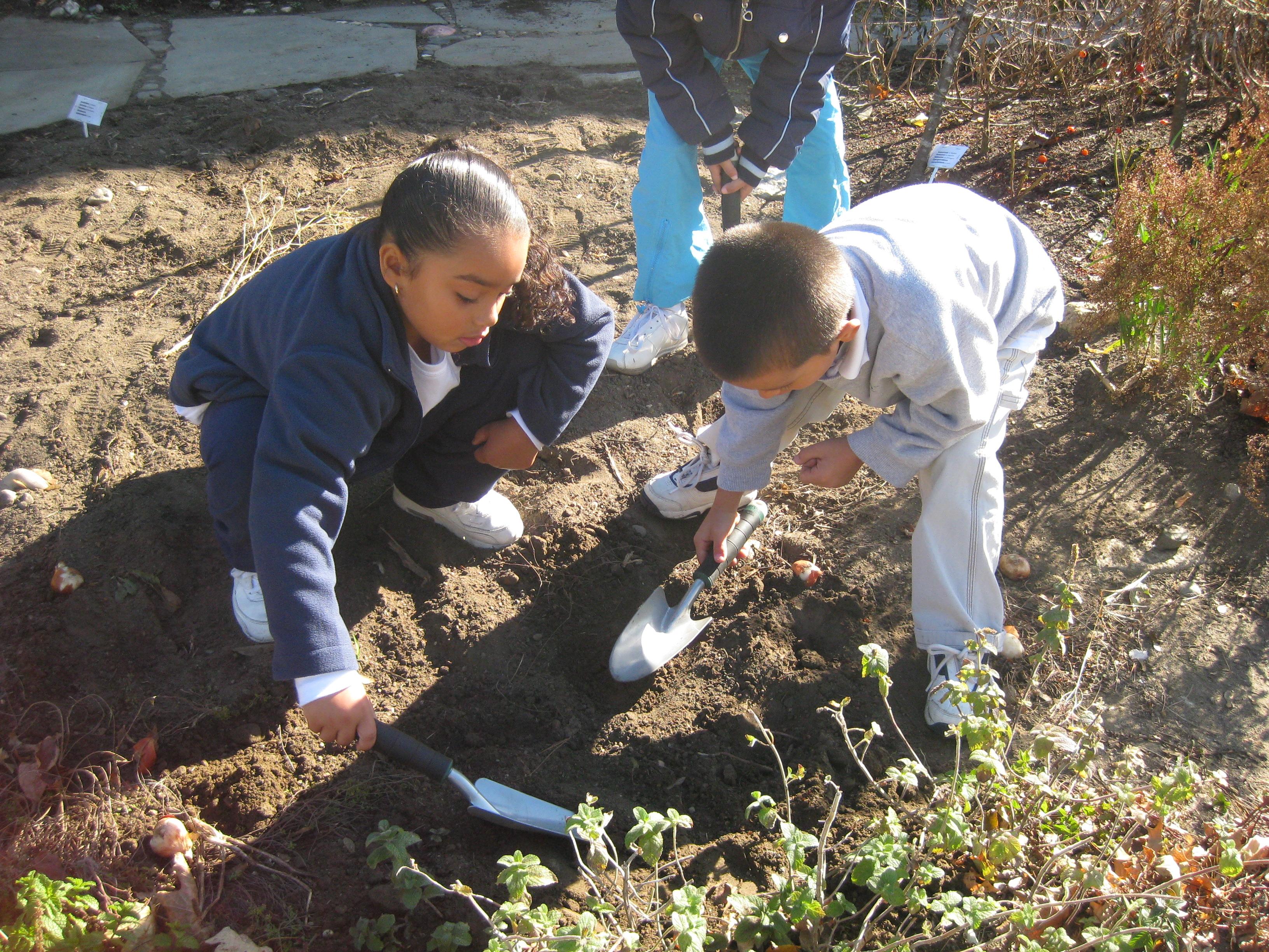 7. bulb planting